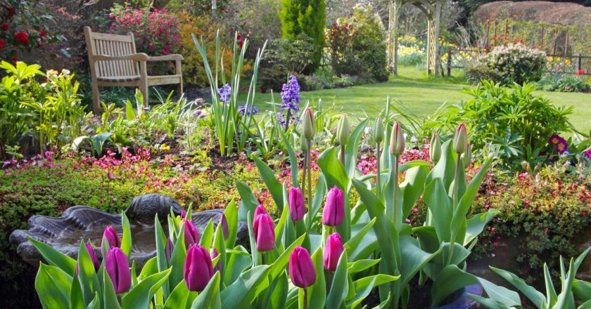 Helpful Tips on Gardening and Plants